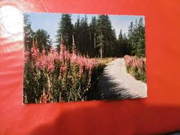 Fleurs -  La Route Des Vacances - Blumen
