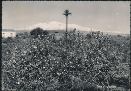 CATANIA - VIA ETNA E AGRUMETO 1955 - Catania