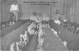 Riemst Kanne / Canne - Champignonnières De Monsieur Van Asbrouck à Canne (Limbourg) - Riemst