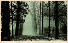 Saint Cloud (92) - Parc - Matinée D'Automne - Saint Cloud