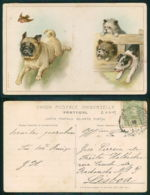 OF [ 20719 ] -  ILLUSTRATEUR - DOG PUG BIRD OTHER DOGS - DEFECT DEFEKT FOLDED!!!! - Chiens
