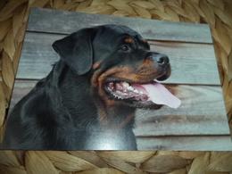 Hund Dog Rottweiler Postkarte Postcard - Chiens