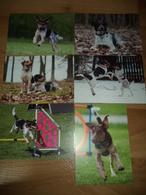 6x Hund Dog Bohemian Spotted Dog Postkarte - Chiens