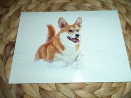 Hund Dog Chien Welsh Corgi  Postkarte Postcard - Chiens