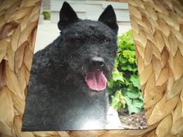 Hund Dog Chien Hollandse Herdershond Ruwhaar Postkarte Postcard - Chiens