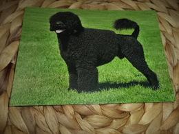 Hund Dog  Chien Portugues Water Spaniel Postkarte - Chiens