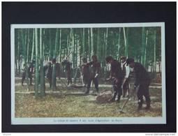 Japan Japon La Culture Du Bambou à Une école D'agriculture Au Japon - Japan