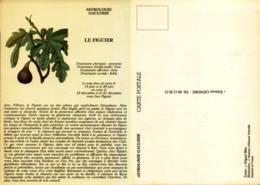 Astrologie Gauloise - Le Figuier - Astrology
