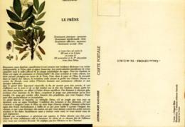 Astrologie Gauloise - Le Frêne - Astrology