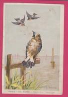 CHROMO CHOCOLAT DE GUYENNE - OISEAU - BIRD - TRAQUET CUL BLANC - SAXICOLA ANANTHE - Old Paper