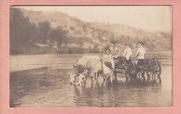 OLD PHOTO POSTCARD - ROMANIA - OX CART - EDIT. SFETEA BUCURESTI - COLECTIA BELLU - Rumänien
