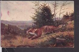 Künstlerpostkarte O.Recknagel , Fuchs , Fox , Jagd  1913 - Chasse