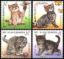 463 - Belarus - 2017 - Kittens Cats - 4v - MNH - Lemberg-Zp - Belarus