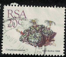 Afrique Du Sud 1988 Oblitéré Used Plante Succulente Conophytum Mundum SU - África Del Sur (1961-...)