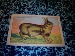Vieux Papier Chromo Bon Point Animaux Domestiques  Le Lapin Domestique - Trade Cards