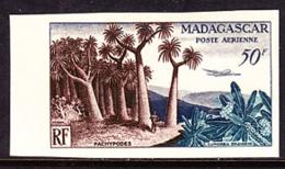 MADAGASCAR (1954) Pachypodes. Trial Color Proof. Scott No C58, Yvert No PA75. - Madagascar (1960-...)