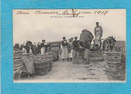 La Champagne. - Les Vendanges - Chargement Des Paniers. - France