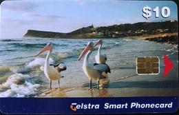 AUSTRALIE  -  Telstra   -  Phonecard  -  Pélican   -  Lennox Head  -  $ 10 - Australië