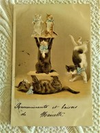 CPA GAUFREE Chromolithographie Illustrateur - Famille Chat Chaton Humanisé Acrobate Sport Cirque - Chats