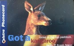 AUSTRALIE  -  Telstra Telecom  - Kangaroo  -  $ 5 - Australia