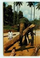 SRI LANKA A Tame Elephant Working At Logging Operations  Ref 1307 - Sri Lanka (Ceylon)