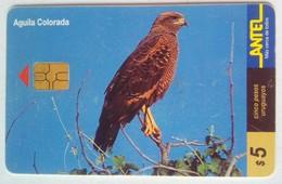 Uruguay $5 Aguila Colorada - Uruguay
