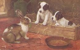 """B.Cobbe. Amog The Bunnies"" Tuck Oilette Postcard # 9539 - Tuck, Raphael"