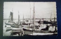 Carte Postale Ancienne- Port-Louis - Thoniers Et Pinasses Au Port - Port Louis