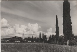 UDINE - BUTTRIO - PANORAMA.....S55 - Udine