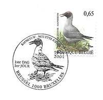 Belgium - Stamp With First Day  Postmark - BUZIN :   Black-headed Gull  -  Chroicocephalus Ridibundus - Seagulls