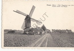 Postkaart-Carte Postale KRUISHOUTEM - ZINGEM Molen 't Dal - Oudste Molen Van België (B267) - Kruishoutem