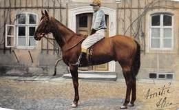 Sport.   Hippisme :     Un Jockey Sur Son Cheval          (voir Scan) - Horse Show