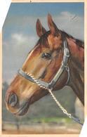 Sport.   Hippisme :       Une Tête De Cheval     Carte Dessinée        (voir Scan) - Horse Show