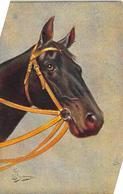 Sport.   Hippisme :       Une Tête De Cheval     Carte Dessinée     3   (voir Scan) - Horse Show