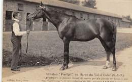 Sport.   Hippisme :     Létalon Prestige Au Val D'Enfer  Par Jouy En Josas 78 ??     (voir Scan) - Horse Show