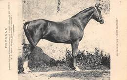 Sport.   Hippisme :     Hercule Poulain Bai Pur Sang  De St Père En Retz 44       (voir Scan) - Horse Show