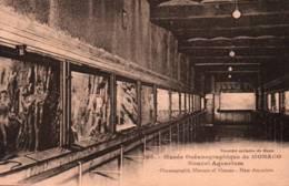 CPA - MONACO - Musée Océanographique - Nouvel AQUARIUM ... Edition Gilletta - Oceanographic Museum