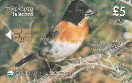 Cyprus, CYP-C-59, Fringilla Montifringilla, Bird, 2 Scans. - Cyprus