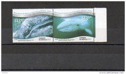 2012 MEXICO - Whales - Balene