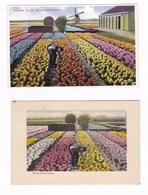 Lot De 3 Jolies CPSM Champs De Tulipes En Hollande - Holanda
