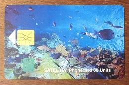 ANTILLES NEÉRLANDAISES SAINT-MARTIN POISSONS SATEL PHONECARD 60 UNITS TÉLÉCARTE PHONE CARD - Antilles (Neérlandaises)