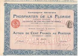 Titre Ancien -Compagnie Générale Des Phosphates De La Floride - Société Anonyme - Titre De 1907 - Mines