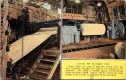 Lumber Industry Making Fir Plywood From Douglas Fir - Industrial