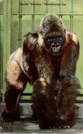 "Pennsylvania Philadelphia Zoo Gorilla ""Bamboo"" 1953 - Philadelphia"