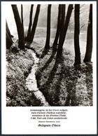 D6517 - TOP Fotokunst Herbert Linde - Spruchkarte Johann Beermann - Verlag Max Keßler - Autres