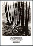 D6518 - TOP Fotokunst Herbert Linde - Spruchkarte Kaspar Stolshagen - Verlag Max Keßler - Autres