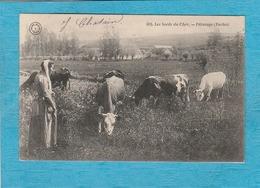 Les Bords Du Cher. - Pâturage ( Vaches ). - France