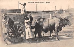 ¤¤   -  YEMEN   -  ADEN   -  Bullock Water Cart  -   Attelage    -   ¤¤ - Yemen