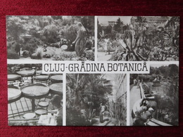 ROMANIA / CLUJ - GRADINA BOTANICA 1960 - Rumania