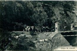 N°9462 -cpa Grupo De Llamas - Peru